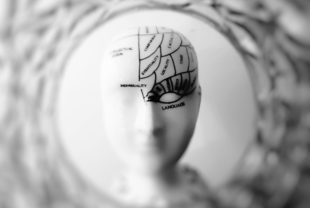 Speaking the languages of the self. Picture of a mannequin head with the brain separated in labelled areas.