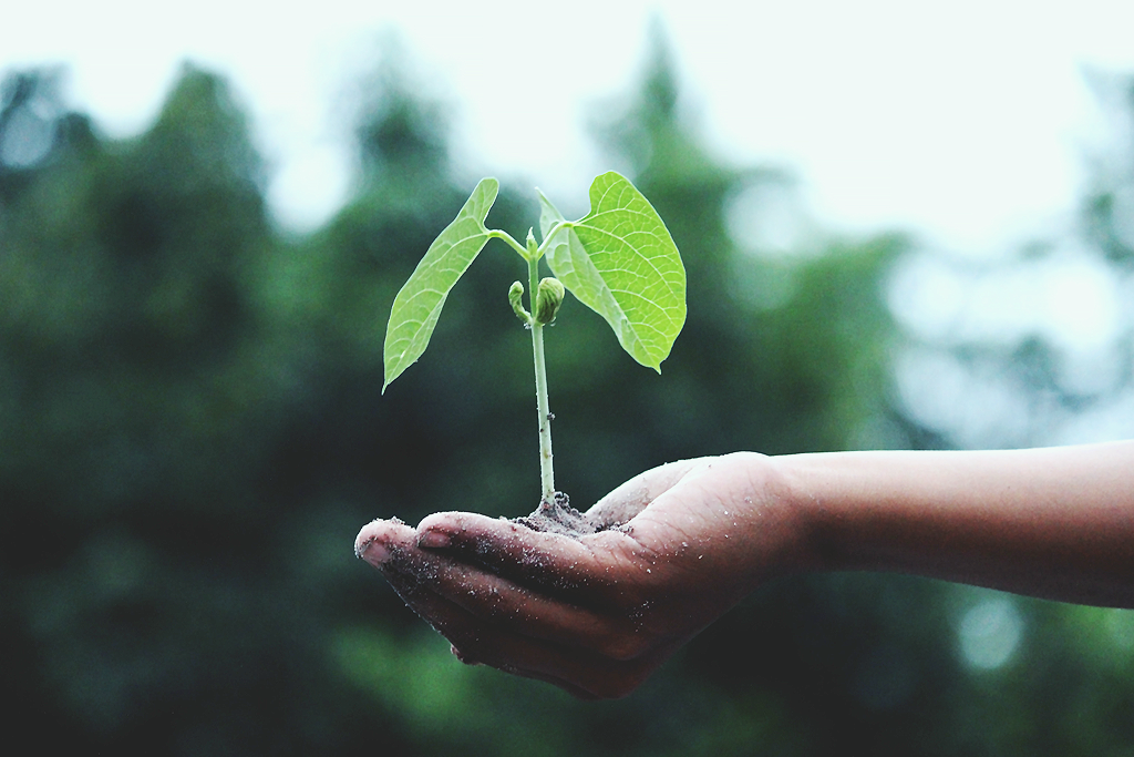 How to create change without shaming yourself. A photograph of a hand holding a growing plant and soil, there are green trees in the background.